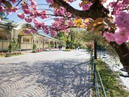 Settimane di primavera e d'estate