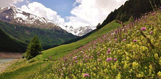 Alto Adige Balance in Val Senales